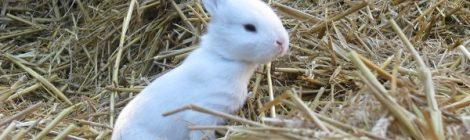 Série coups de coeur n°2 - Mon petit lapin blanc