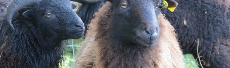 Photo n°5 - Il pleut, il pleut bergère. Rentre tes noirs moutons!
