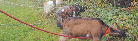 Photo n°8 - Concours de pêche... à la chèvre !