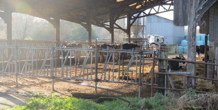 Il pleut, il mouille… les vaches ont perdu la clef des champs.